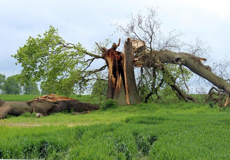 Efter stormen – nu granskas branschens katastrofhantering