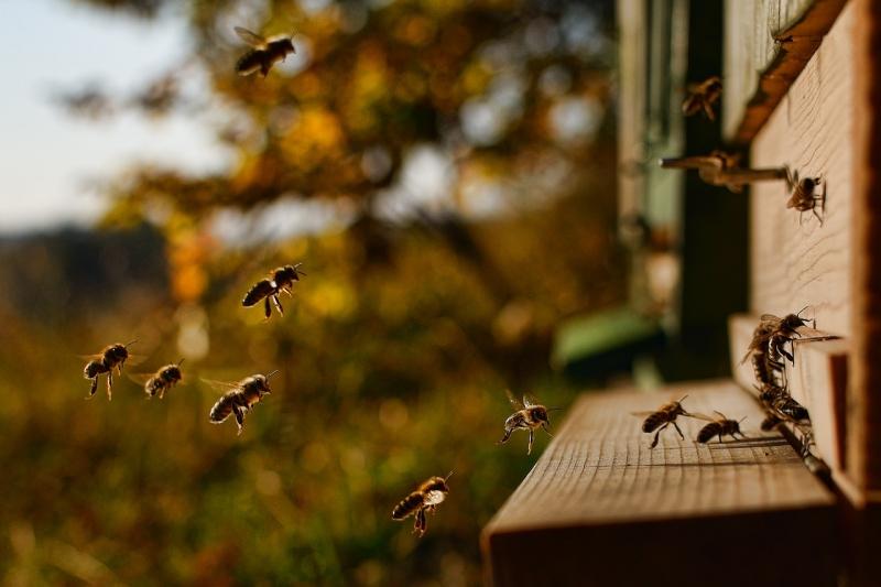 Uppkopplad bikupa ska bevara biologisk mångfald